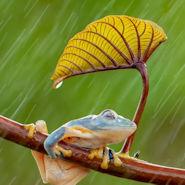 Microsoft Monsun Regen Wallpaper für Windows 10